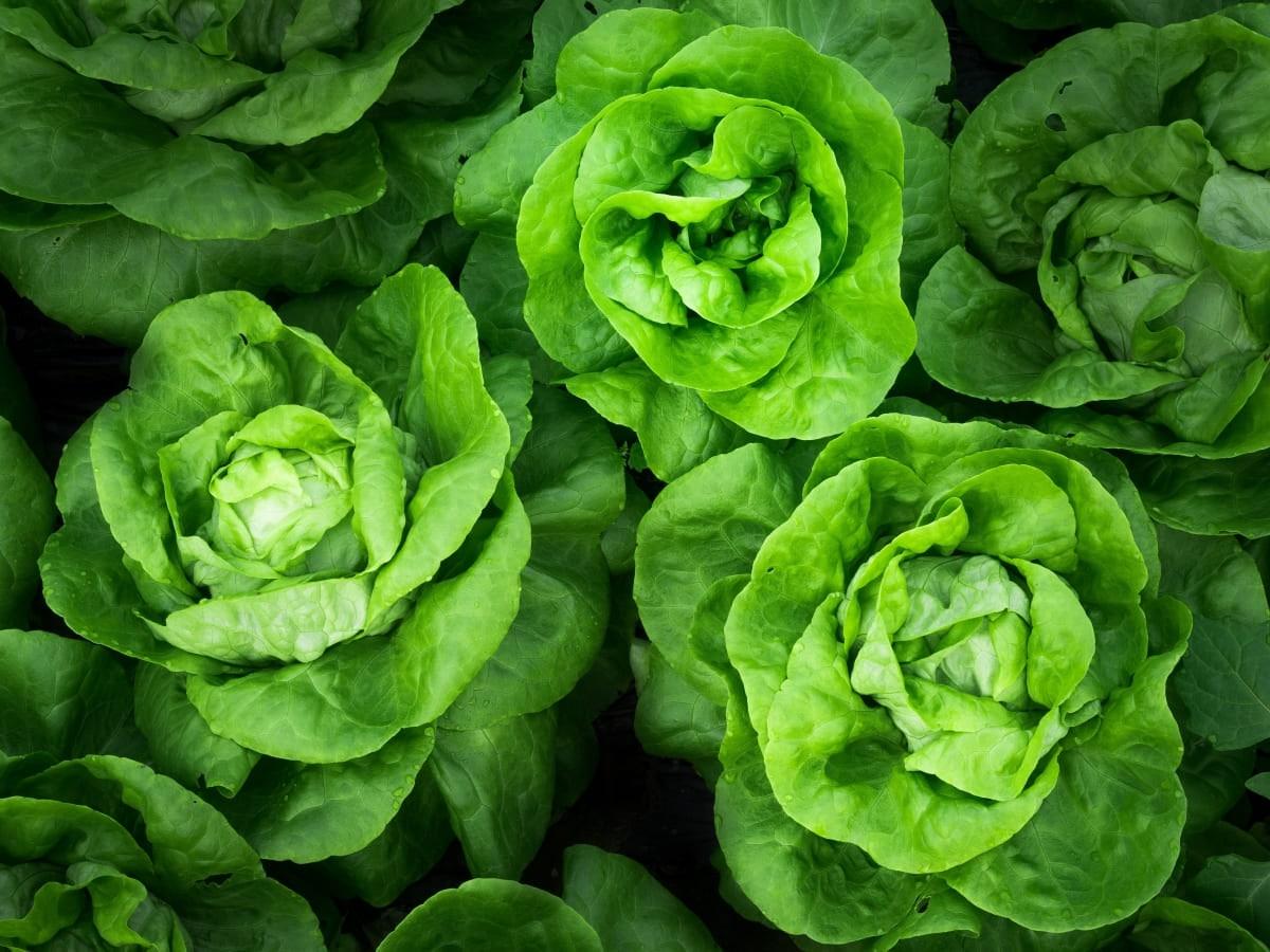 Agricultura ecológica beneficios