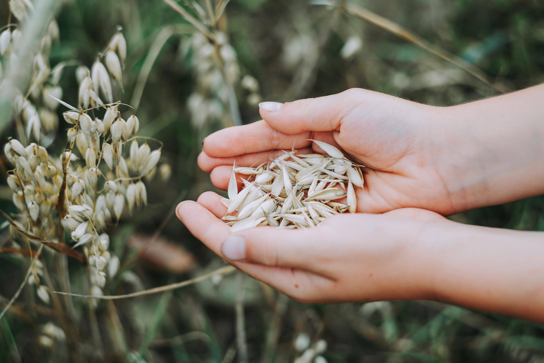 Beneficios de la agricultura biodinámica