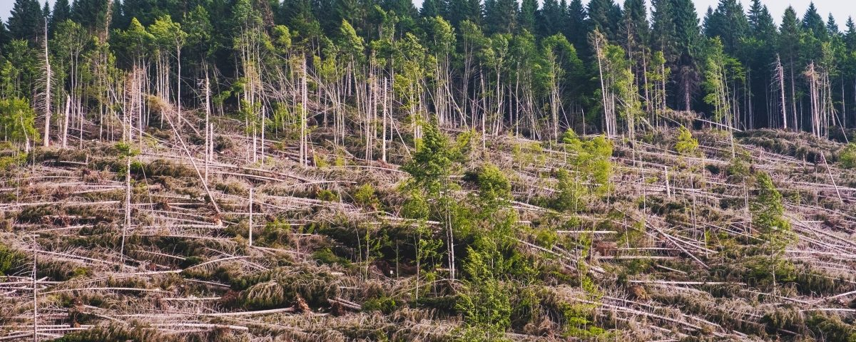 Influencia del Cambio Climático en la agricultura